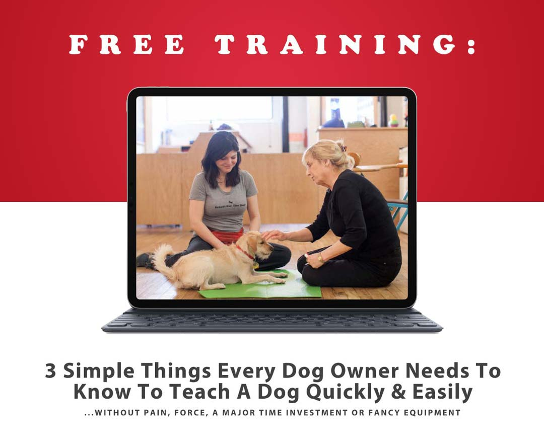 A Special From School For the Dogs for Free Training Showing a Laptop with Dog Trainier and Cofounder Annie Grossman with a client and her pupper