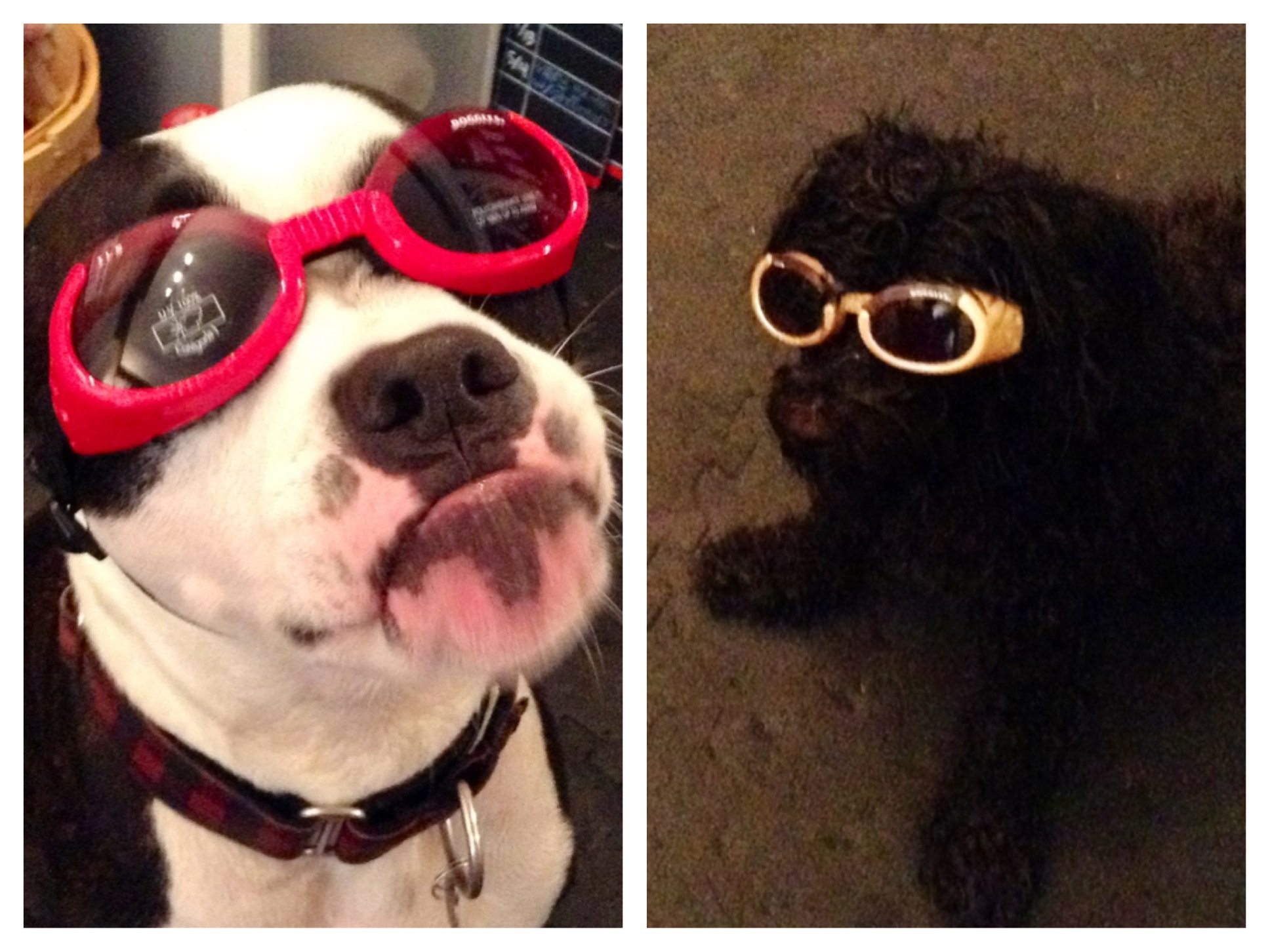 c30c95767c9 04 Jun Why your dog might actually benefit from a pair of sunglasses