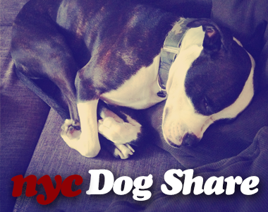dog-share-sidebar2