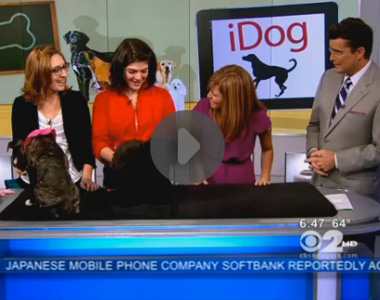 School For The Dogs on CBS 2 News