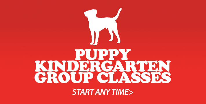 Puppy Kindergarten Classes