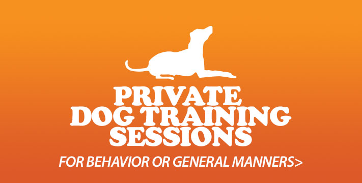 Private Dog Training To Address Behavior Issues