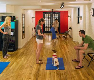 group-dog-training-1