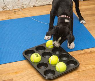 group-dog-training-4