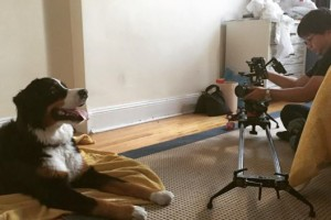 Canine Film & TV Talent
