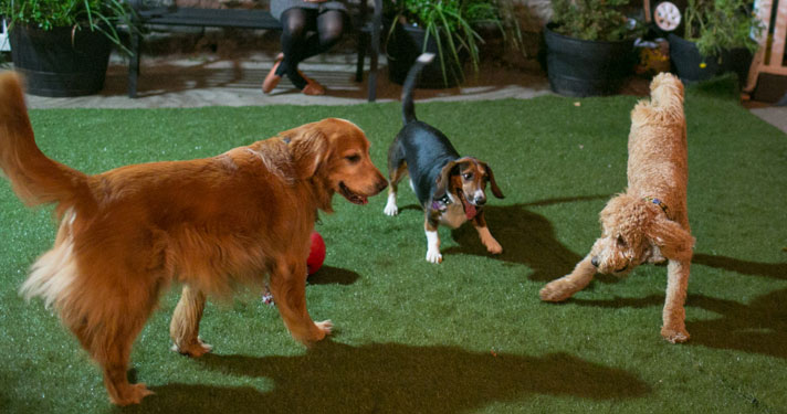 dog-run-2