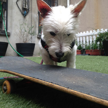 Leash Aggression Reform School: Skater Haters