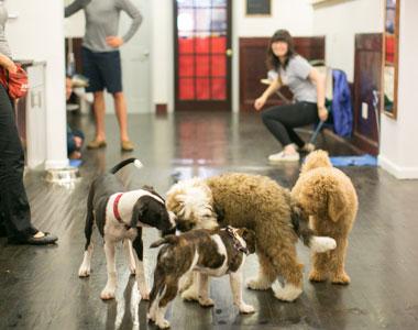 puppy-class-2