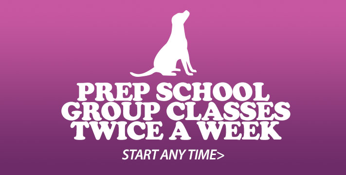 Prep School - Dog Training Obedience Group Class