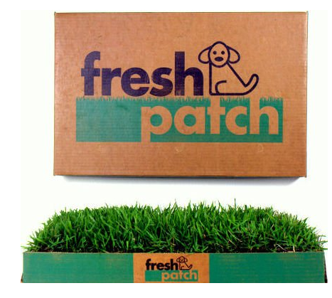 fresh patch dog grass