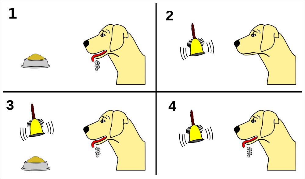 the use of classical conditioning in 4 examples of classical conditioning classical conditioning can be applied in the classroom, for the creation of a pleasant environment to help the students overcome their anxieties and fears for example, if we pair public speaking, which is an anxiety-provoking situation, with pleasant surroundings, then students will eventually learn to stay.