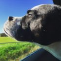 Ask a Veterinarian: Essential Pet Dog Tips for Summer at School For The Dogs