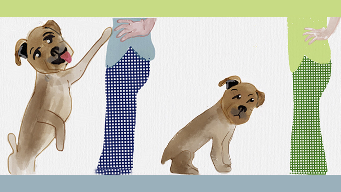 How To Stop A Dog From Jumping Before He Starts School For The Dogs