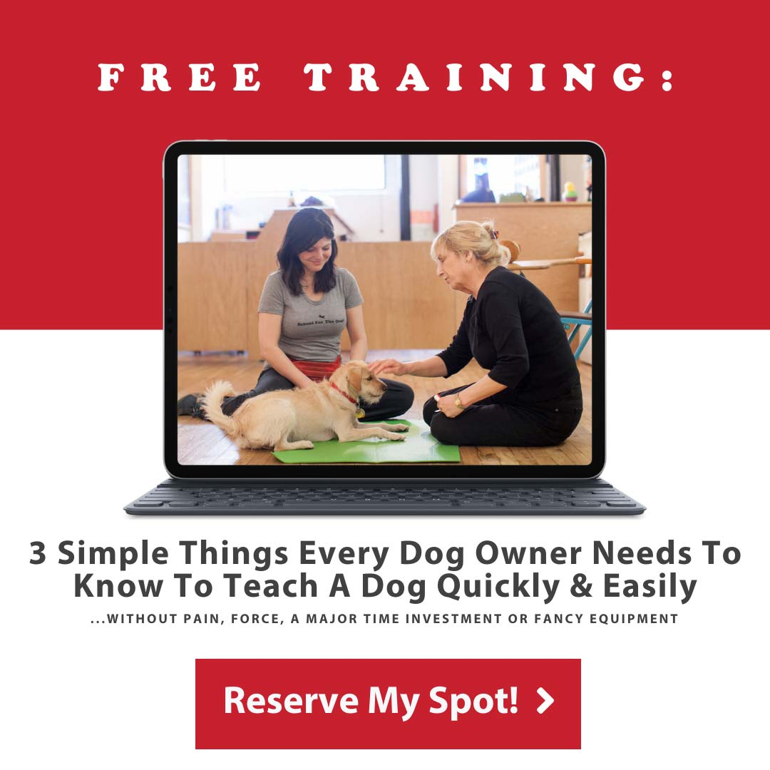 School For The Dogs Free Training Promotion